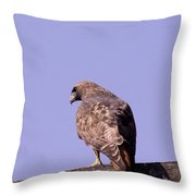 Backside Of A Hawk   Throw Pillow