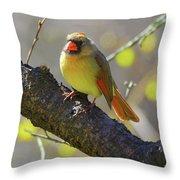 Backyard Bird Female Northern Cardinal Throw Pillow