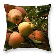 Backyard Garden Series - Apples Cluster Throw Pillow