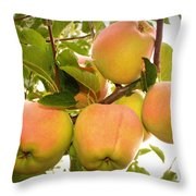 Backyard Garden Series - Apples In Apple Tree Throw Pillow