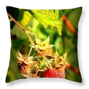 Backyard Garden Series - One Ripe Raspberry Throw Pillow