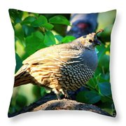 Backyard Garden Series - Quail In A Pear Tree Throw Pillow