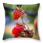 Backyard Garden Series - The Freshest Raspberries Throw Pillow