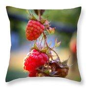 Backyard Garden Series - The Freshest Raspberries Throw Pillow