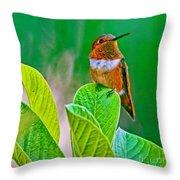 Backyard Hummingbird #22 Throw Pillow