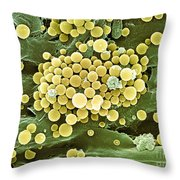 Bacteria On Hops Leaf, Sem Throw Pillow