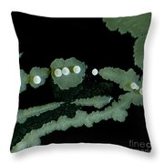 Bacterial Colony, Lm Throw Pillow