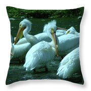 Bad Hair Day At The Pelican Social Gathering  Throw Pillow