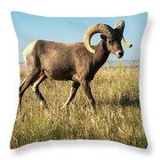 Badlands Ram Throw Pillow