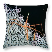 Bahamas, Marine Life Throw Pillow