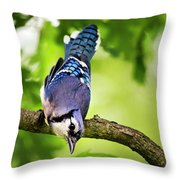 Balanced Blue Jay Throw Pillow