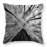 Bald Cypress Sky Throw Pillow