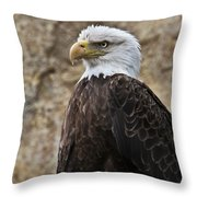 Bald Eagle - Portrait 2 Throw Pillow