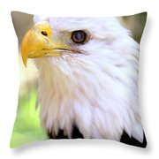 Bald Eagle 1 Throw Pillow