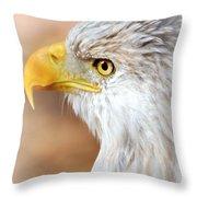 Bald Eagle 15 Throw Pillow