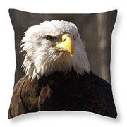 Bald Eagle 5 Throw Pillow