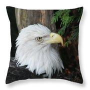 Bald Eagle #8 Throw Pillow