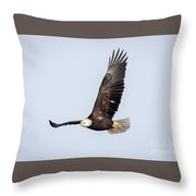 Bald Eagle Flying Over Horicon Marsh Throw Pillow