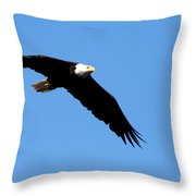 Bald Eagle IIi Throw Pillow