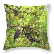 Bald Eagle In A Pine Tree, No. 5 Throw Pillow