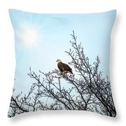 Bald Eagle In A Tree Enjoying The Sunlight Throw Pillow