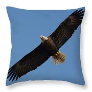 Bald Eagle In Flight 031520169113 Throw Pillow
