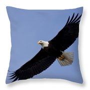 Bald Eagle In Flight Throw Pillow by John Hyde - Printscapes