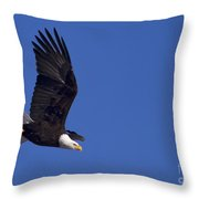 Bald Eagle In Flight-signed #1198 Throw Pillow