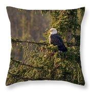 Bald Eagle In Pine Throw Pillow