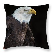 Bald Eagle Intensity Throw Pillow
