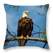 Bald Eagle Throw Pillow