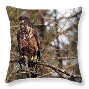 Bald Eagle Juvenile 2 Throw Pillow