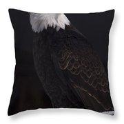 Bald Eagle Majestic Throw Pillow