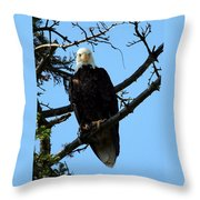 Bald Eagle Nw3058 Throw Pillow