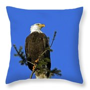 Bald Eagle On Blue Throw Pillow