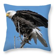 Bald Eagle On Cottonwood Tree Branches Throw Pillow
