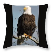 Bald Eagle Perched On Branch On A Windy Day Throw Pillow