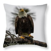 Bald Eagle Protecting His Fish Throw Pillow