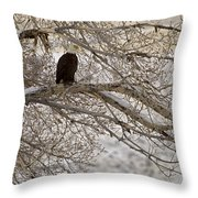 Bald Eagle-signed-#4879 Throw Pillow