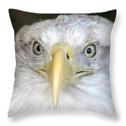 Bald Eagle Up Close Throw Pillow