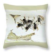 Bald Faced Hornets Throw Pillow