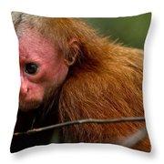 Bald Uakari Monkey Throw Pillow