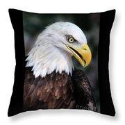 Baldeagle-6884 Throw Pillow
