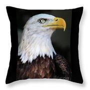 Baldeagle-6903 Throw Pillow