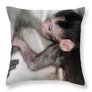 Balinese Baby Monkey Feeding Throw Pillow