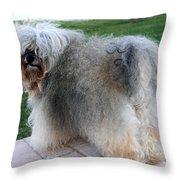 ball of fur Havanese dog Throw Pillow