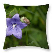 Balloon Flower Throw Pillow
