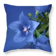 Balloon Flowers - Blooms And Buds Throw Pillow