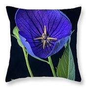 Baloon Flower In Early Morning Throw Pillow