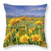 Balsam On The Rocky Mountain Front Throw Pillow